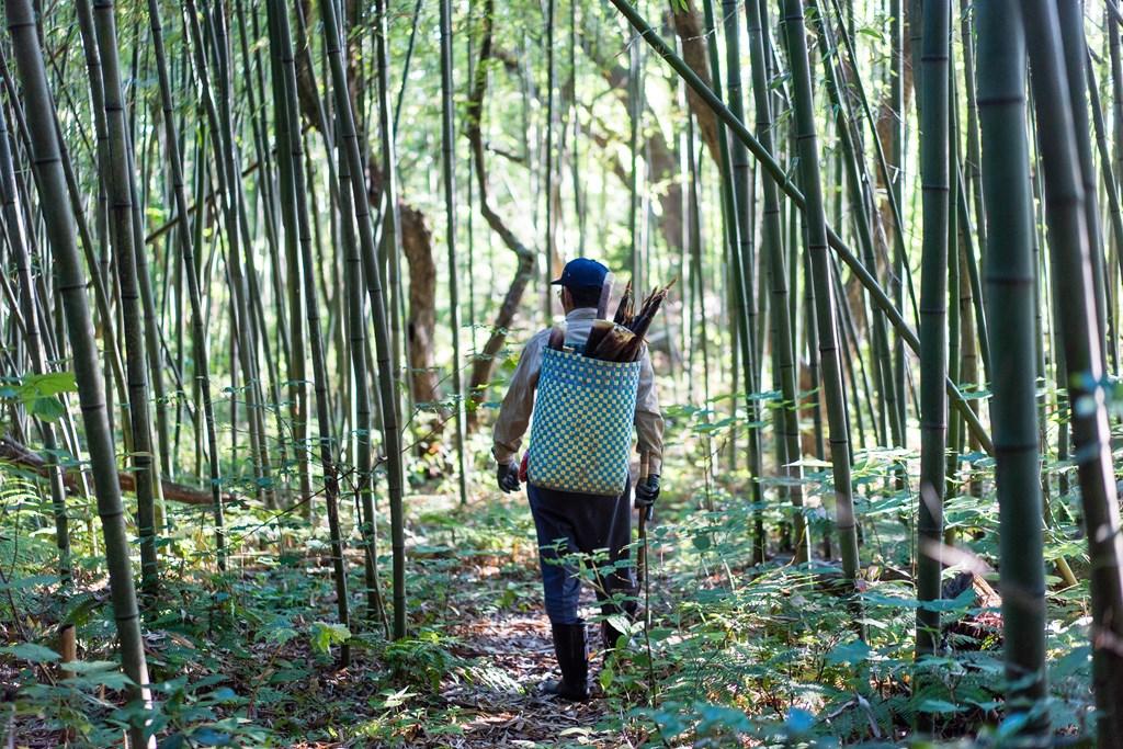 カラ竹収穫